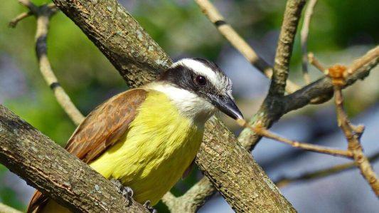 árvore que atraem os pássaros