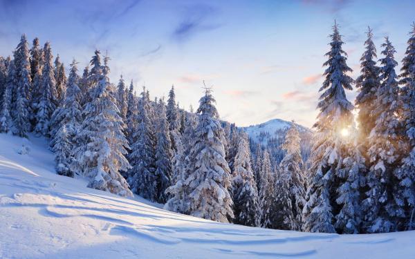 Imagem belíssima do inverno.