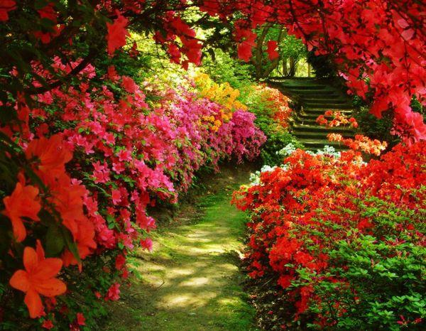jardins floridos arco-íris