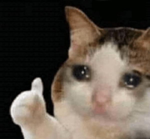meme de gato triste