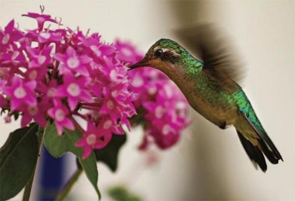pássaro impressionante lindo voando