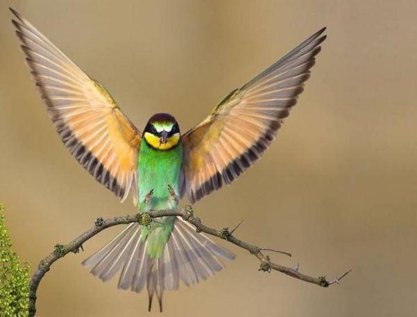 pássaros brasileiro perfeito