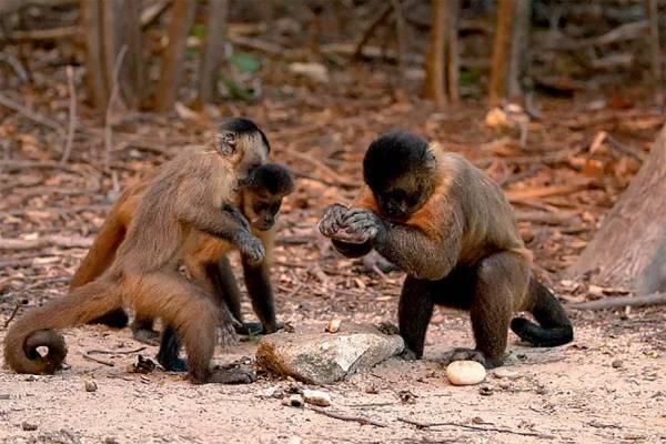 Imagem de macaco em grupos.
