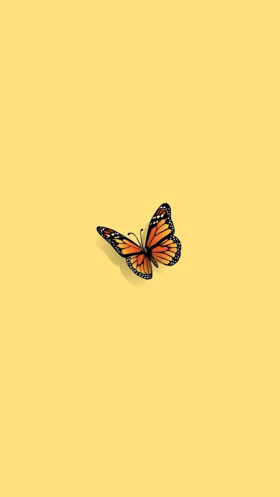 wallpaper liso com borboleta