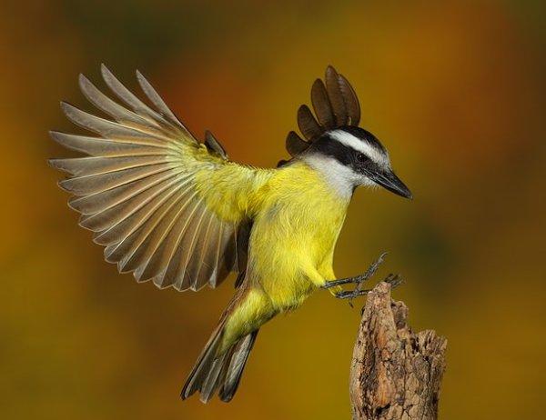 registro de pássaro voando
