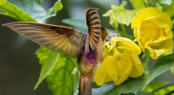 pássaro voando ao redor flor