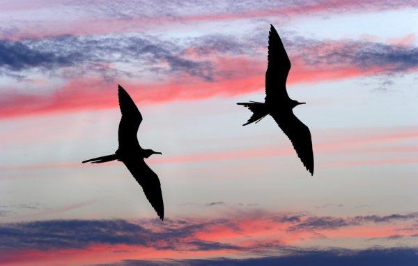 no céu pássaro voando