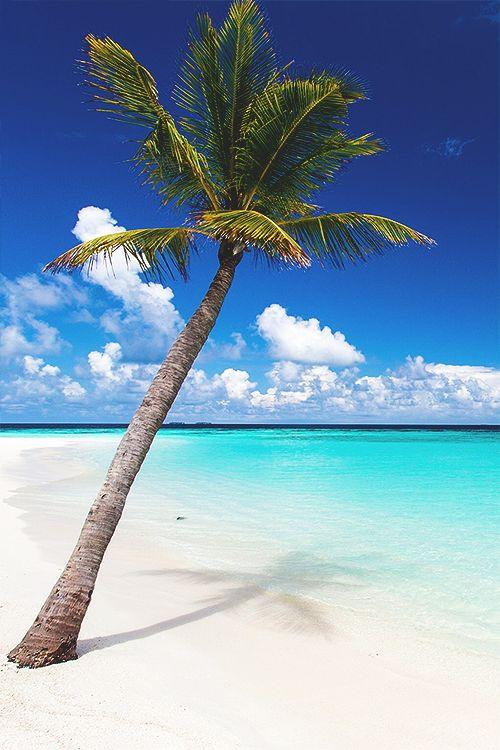 Papel de parede coqueiro na praia