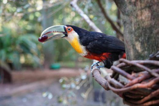 pássaro comendo fruto da ávore