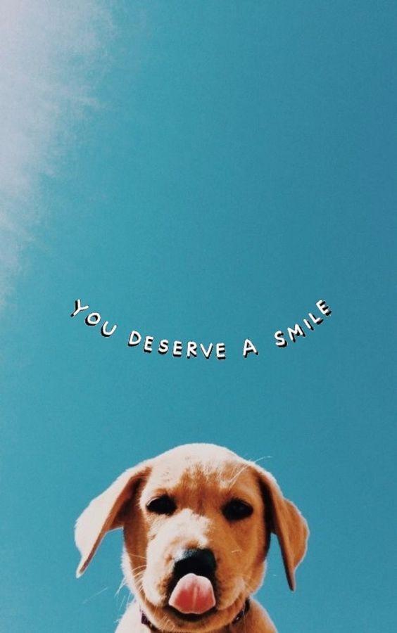 wallpaper cachorro com frase em inglês