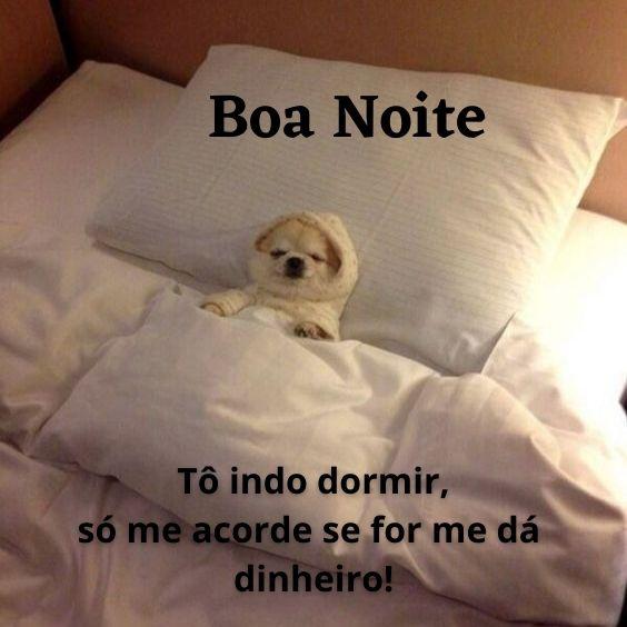 Frase engraçada de boa noite com cachorro