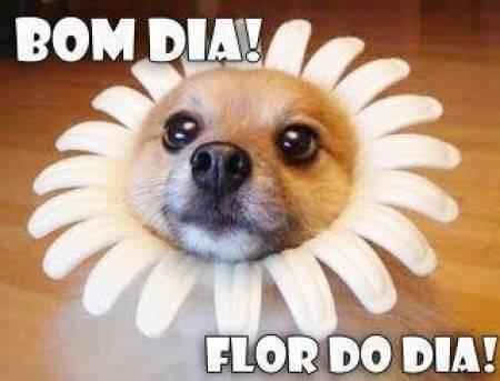 Bom dia engraçado Frases flor