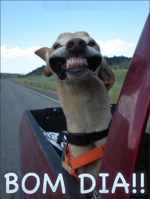 rindo com bom dia engraçado