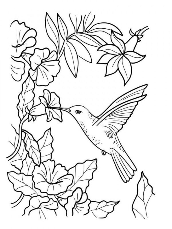 desenho de flores beija-flor
