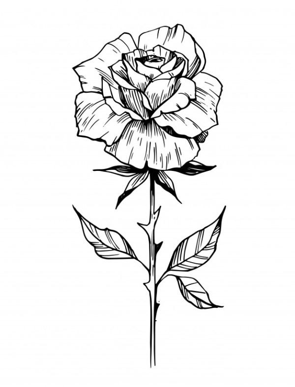 desenho de flores a mais linda