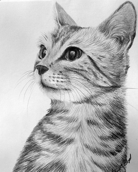 Imagem de gato super realista desenho