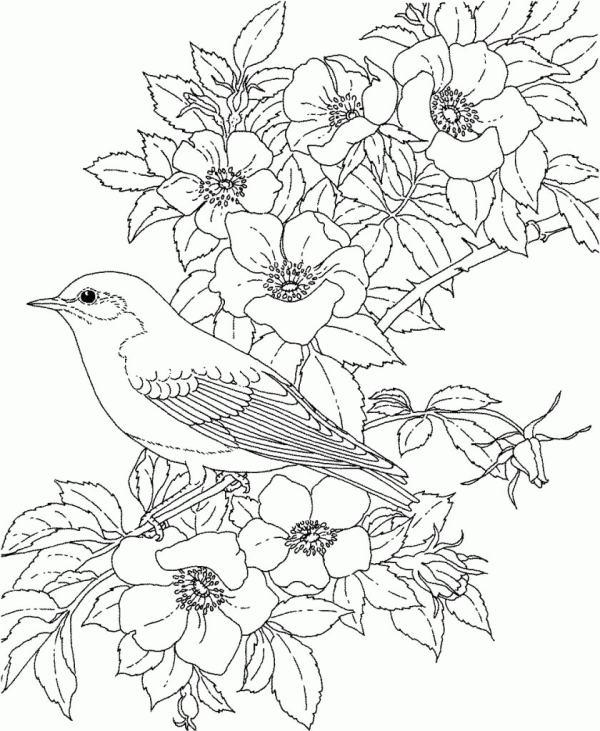 desenho de flores com passaros