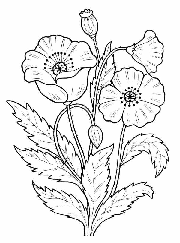 desenho de flores belas