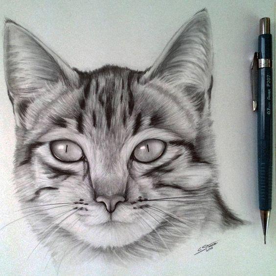 Gato desenho maravilhoso.