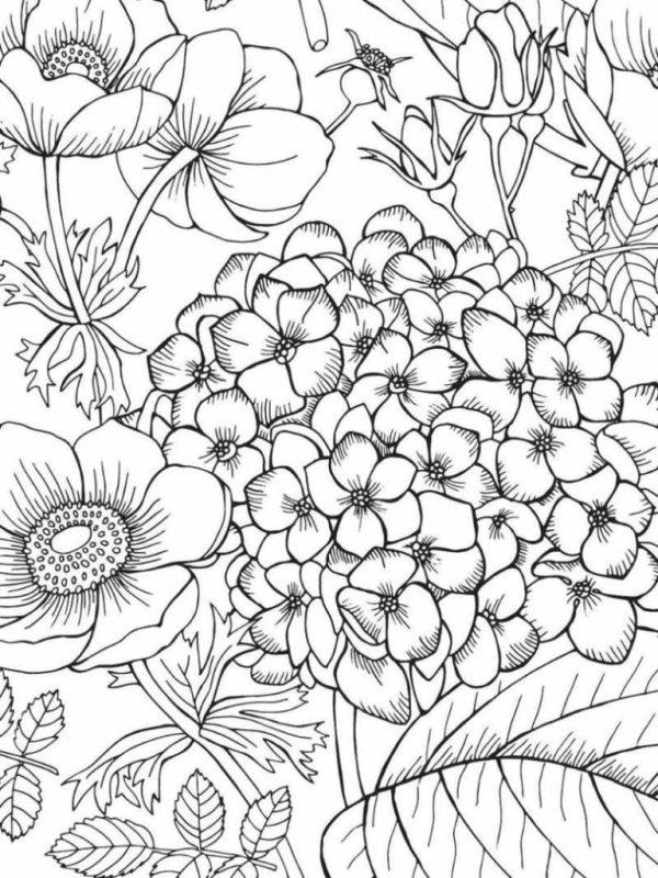desenho milhares  de flores