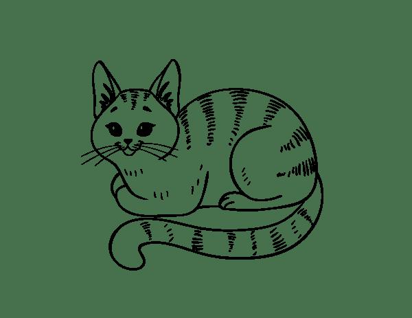 Gatinho fácil para desenhar