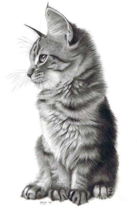 Gato realista desenho perfeito