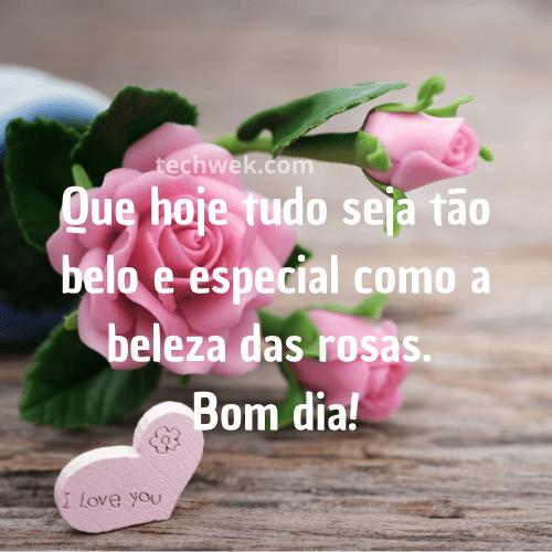 belas imagens de rosas