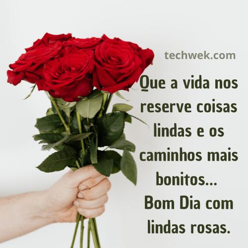 rosas verrmelhas de bom dia