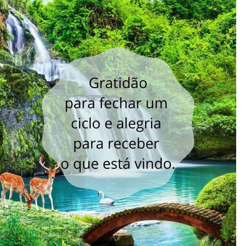 Frase de gratidão a Deus pelas coisas lindas da vida
