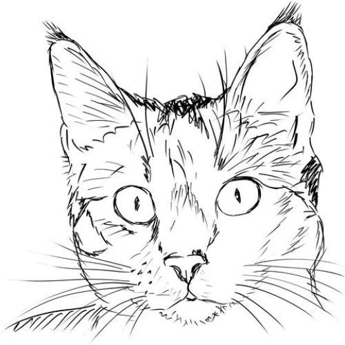 Desenhos de gatos para pintar simples