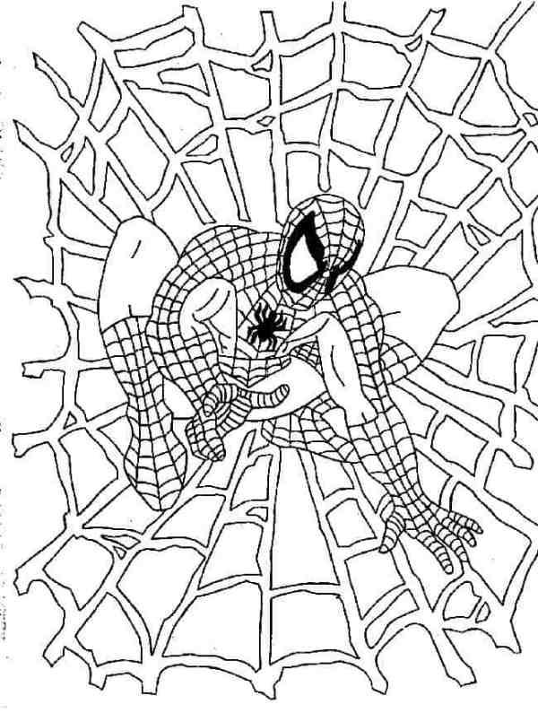 desenho do homem aranha na teia de aranha