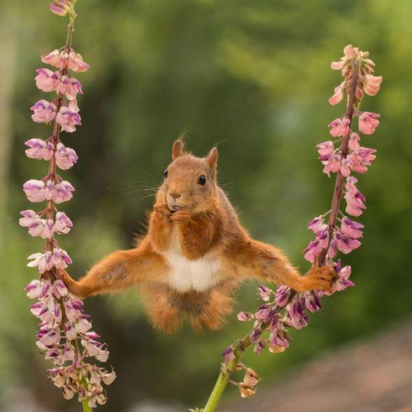 Fotos engraçadas de Animais ginasta