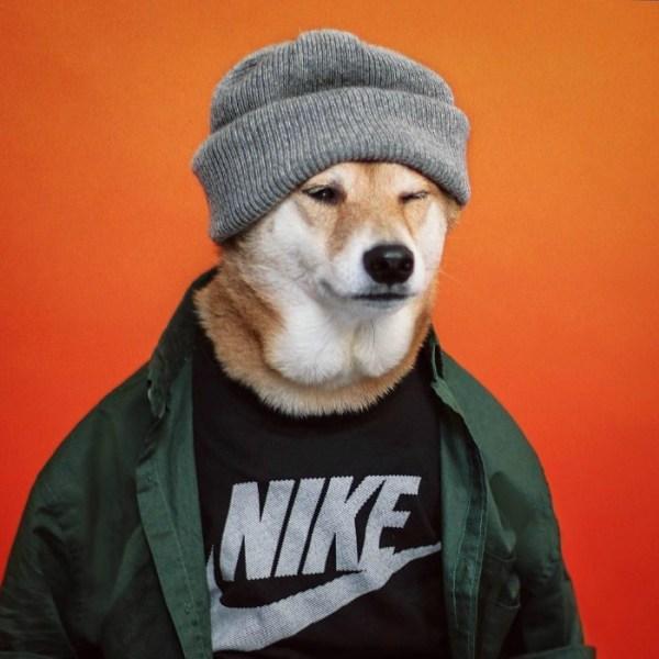 Fotos engraçadas de Animais na moda