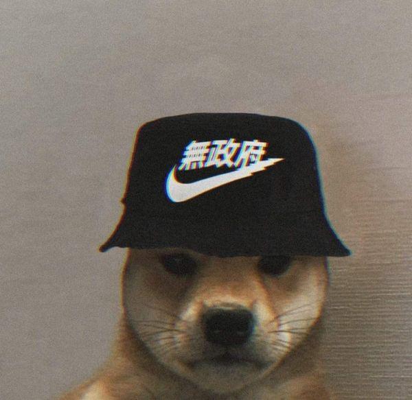 Fotos engraçadas de Animais dog
