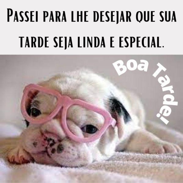 especial boa tarde de cachorrinho de óculos
