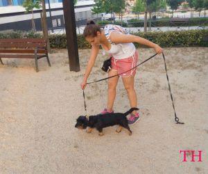 Comenzar a adiestrar a tu perro: Luring
