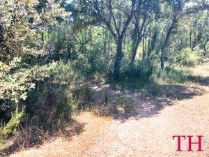 Hacer ruta de senderismo con perro por Guadalajara