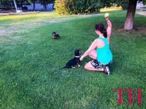 Aprende a jugar con tu perro: cuatro tipos de juegos