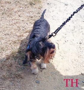 quinta y última etapa del Camino de Santiago Francés con perro