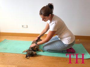 Cómo dar un masaje a un perro