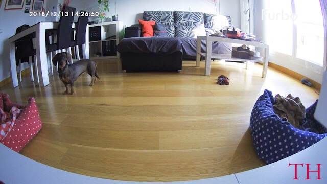 Sorteo FURBO dog Camera