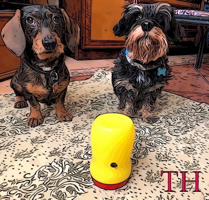 Dispensador comida DIY para perros