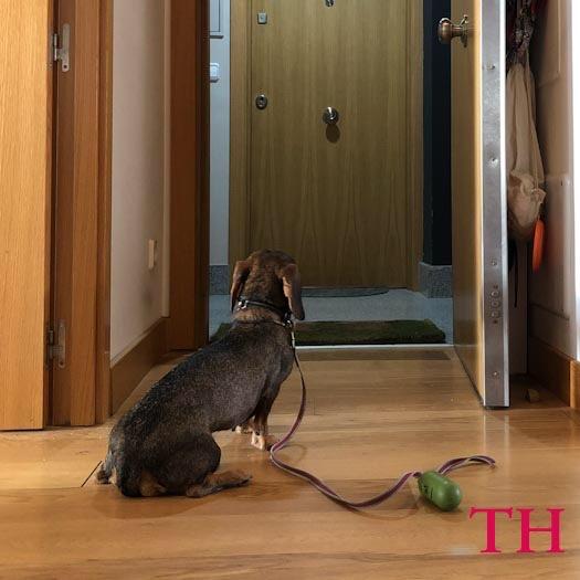Practica el autocontrol con tu perro