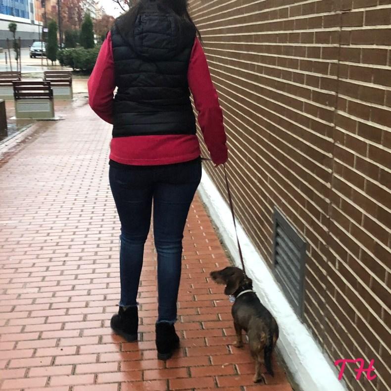 Enseñar el junto a tu perro