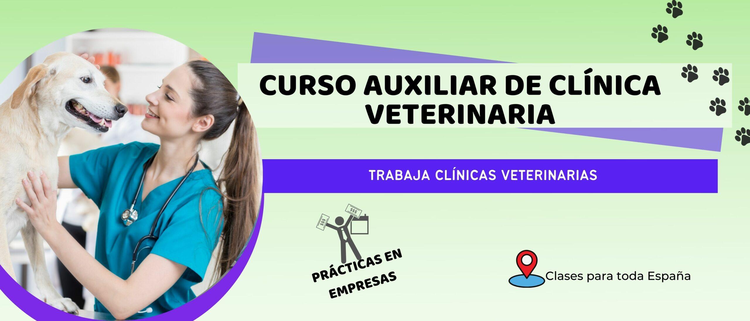 Auxiliar de clínica veterinaria