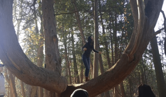 exhilarating-tree-climbing