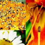 Dennis vanEngelsdorp: A plea for bees