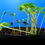Stefano Mancuso: The roots of plant intelligence