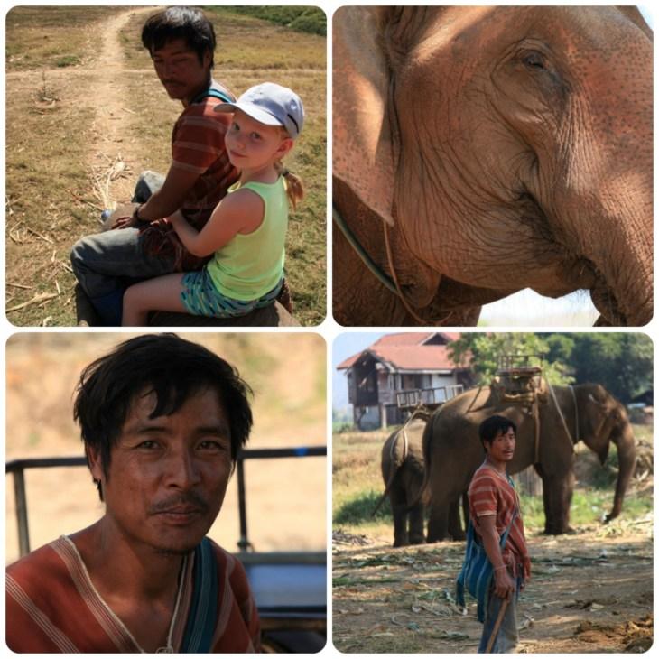 Elephant Camp Collage