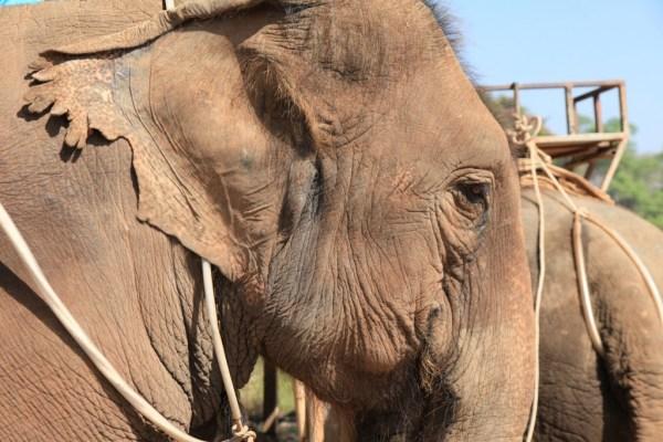 LGV170 2015-02-24 thailand chiang mai elephant camp 2 copy
